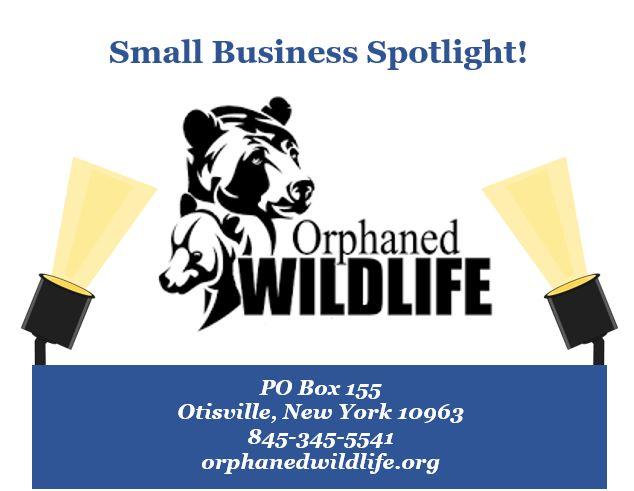 orphaned wildlife